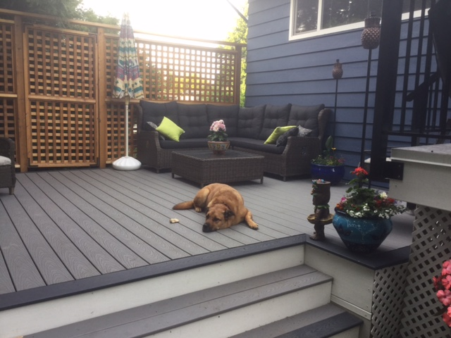 a dog sleeping on some trex deck